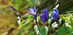 Wildblume (Hugo von Schreck) Tags: hugovonschreck outdoor wildflower wildblume macro makro flower blume blte canoneos5dsr tamron28300mmf3563divcpzda010