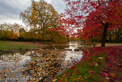 Autumn 2 (- H a c e n e P h o t o -) Tags: feuille leaf arbre tree rouge red autumn automne france lake lac eau water nature