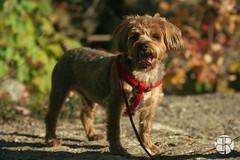 _MG_9493 (Brandon Ricklefs) Tags: explorersoflight naturallight goldenhour nature park libertystatepark girlfriend girl dog adventure vsco vscocam