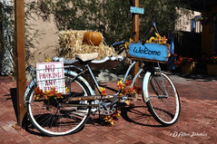Fall Display (D Allen Johnson Photography) Tags: united states new mexico bernalillo county albuquerque old town fall pumpkin bicycle no parking any time sign straw bale quilt seat rim rims wheel wheels tire tires plaza shop shopping store stores front handle bar bars pedal pedals fender fenders chain guard spokes spoke brick bricks paver pavers path walk way walkway