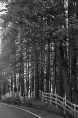 Meandering Fence - May Valley Highway BW (Don Thoreby) Tags: mayvalley mayvalleywashingtonstate horsefarms farms barns mayvalleyhighway squakmountain autumn fall backroads countrylanes ranch horseranch ranchfence fenceline