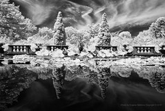Mirror Pool, Old Westbury Gardens (infrared) (jev) Tags: avenon bw leicam8 oldwestburygardens super architectural architecture blackandwhite blue building bwmaniac bwphotooftheday bwn digitalinfrared ecology ecosystem edifice edifices environment environmentalism followme forest historic historical home igaddict igdaily infra infrared instablackandwhite instadaily instalike instalove jjblackwhite land landscape leica longisland mansion minimal monochrome moodygram nature ny nycphotographer residence residentialbuilding scenery spectrum structures surreal white wide wierdbutcool wwwartqcom