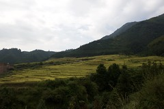 Guangdong (Jil Kristin) Tags: guangdong china nature weekend canon digital rice cultivation mountains view