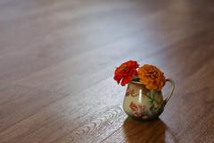 Simple (Mulewings~) Tags: stilllife bestill zinnias floors shadows light