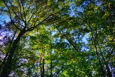 DSC05422-24_HDR (Capt Kodak) Tags: autumn chattahoocheerivernationalrecreationarea fall hdrefexpro2 madefrom3images medlockbridgepark nationalparkservice nikcollectionbygoogle niksoftware photomerge