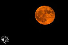 Octobers Hunter's Moon | 2016 (RGL_Photography) Tags: astrophotography bloodmoon huntersmoon jerseyshore luna monmouthcounty moon moonrise nightphotography nightsky nightscape nikonafs200500mmf56eedvr nikond610 perigree supermoon longbranch newjersey unitedstates us