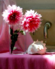 bath time (Ani Carrington) Tags: stillife stilllife dahlias pink pinkdahlias soft delicate