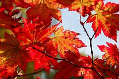 Thorp Perrow Arboretum (Angela Weatherall) Tags: thorp perrow arboretum north yorkshire birds prey owl hawk