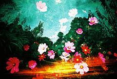 Lomo  the girl with the flowers in her sunset (lomomowlem) Tags: lomo lomography lca multipleexposure xpro xprocess crossprocess kodakelitechrome ebx flowers sunset lofi analogue expiredfilm triple accident mxbutton
