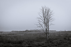 time to capture black & white (bhansen.kiel) Tags: black white bw schwarz weiss tree baum einsam trist himmel dnen nebel mist dnemark denmark graerup nordsee