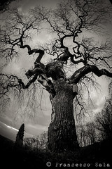 Dark tree (100% made in Friuli) Tags: italy white black tree canon vintage italia fisheye manual 16mm albero zenitar bianco nero friuli savorgnano 5d2
