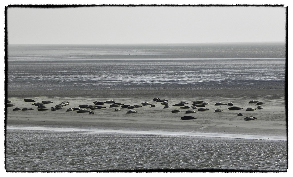 The World\'s Best Photos of seehunde and wattenmeer - Flickr Hive Mind