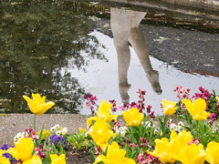 Tiptoe through the tulips (Brian Negus) Tags: flowers england sculpture reflection spring pond tulips legs unitedkingdom queenspark swimmer loughborough tiptoe charnwood blindphotographers