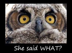 SHE SAID WHAT? (Aspenbreeze) Tags: baby colorado wildlife owl greathornedowl owlet coloradowildlife aspenbreeze moonandbackphotography bevzuerlein