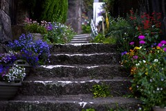 stairs with flowers (kmmanaka) Tags: japan stairs crossing nightview nagasaki stonebridge kokaido umamachi
