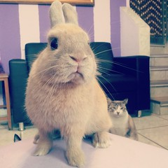 Rosie and our cat! (babybunnysp) Tags: bunny cat netherland flickrandroidapp:filter=none