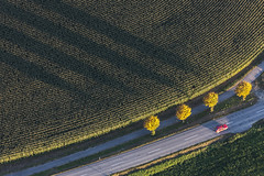 Red Car - 44 (Aerial Photography) Tags: trees shadow tree by mood aerial bume schatten baum deu stimmung autumntrees redcar luftbild leaftree luftaufnahme lineoftrees bayernbavaria deutschlandgermany ndb rotesauto autumntree laubbaum herbstbaum dgf deciduoustree baumreihe rowoftrees herbstbume foliagetree landauadisar fotoklausleidorfwwwleidorfde 10102010 dingolfingerstras