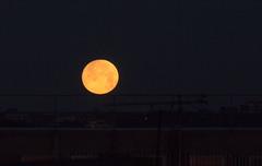 Moonset 19 July 2016 (Sculptor Lil) Tags: sky moon london astrophotography handheld moonset waxinggibbous canon700d dslrsingleexposure