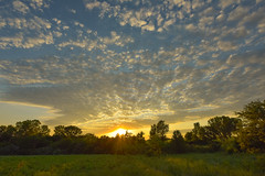 Alto Cumulus Sunset (thefisch1) Tags: cloud alto cumulus kansas sunset sky pasture tree line horizon pattern nikon nikkor 1424 flint hill interesting oogle ogle color colorful calendar picture
