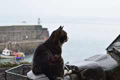 a wet morning in clovelly (couzensmark) Tags: clovelly devon wet rain cat harbour quay boats boat sea wall damp summer