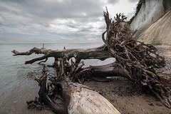 Jasmund (hansekiki ) Tags: rgen jasmund nationalpark ostsee balticsea strand beach zeissdistagont2815mm distagon1528ze distagont2815 canon 5dmarkiii