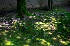 (蔡藍迪) Tags: 京都 日本 關西 d600 nikon 二度目の京都 japan japanese japanesegarden shisendo 詩仙堂 曼殊院道 50mm 18g nidomenokyoto green 新綠