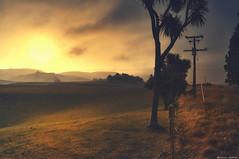 Burning Desire (Kevin_Jeffries) Tags: field tree light sunlight haze smokey landscape nature jeffries nikon d90 sunset new