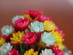 (choong mun) Tags: lightblue white green yellow red blue flowers panasoniclumixg7