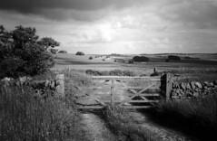 Wooden Gates (l4ts) Tags: landscape derbyshire peakdistrict whitepeak hardrakeplantation sheldon farmland drystonewall woodengate blackwhite filmscan blackwhitenegativefilm olympusxa2 kentmere100film nikoncoolscaniv vuescan