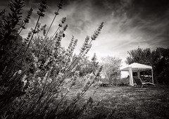 The Sun Trap (Missy Jussy) Tags: sunlight labrugere cottagegarden holidaycottage holiday dordogne france southwestfrance flowers lavender bee grass lawn gazebo chair trees sky clouds summer trip mono monochrome blackwhite bw canon canonpowershotsx60 landscape moodylandscape atmosphere