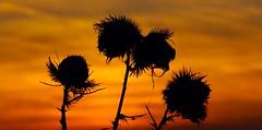 Sunset Emsland (AstridSusann) Tags: sunset autumn germany emsland outdoor
