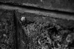(C-47) Tags: ville mur escargot snail animal shell blackwhite bw city wall stone solid life canon 70300mm eos 400d zoom macro blur small fragile france paris composition