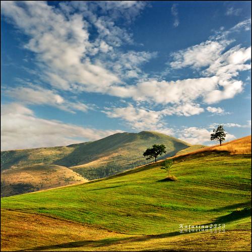 Green Pastures
