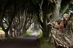 Dark Hedges (Fo.El) Tags: tree antrim ireland fagus road shadows
