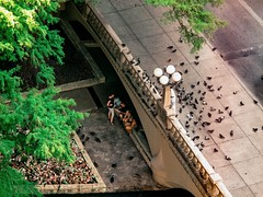 Bird's Eye View (photo.po) Tags: canoncompactcameras canong10 canon canongseries mallards ducks family street streetphotography pigeons birds tourists tx sanantoniotx