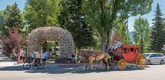 The Village Square (Ron Drew) Tags: nikon d800 wyoming jackson hole jacksonhole grandteton elk antlers stagecoach townsquare trees summer tourists horses