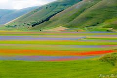 _DSC5070 (Lord_Robe_83) Tags: castelluccio fioritura