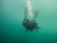 PA060375.jpg (Michael Bartosek) Tags: olympusepl3 catalinaisland olympus1442mm underwater catalina diving california pacificocean