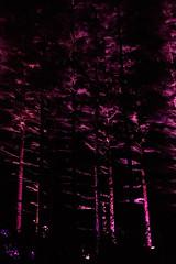 MushRmFest_592 (Lance Rogers) Tags: camera kennettsquare pa longwoodgardens nightscape nikond500 pennsylvania people places lancerogersphotoscom lancerogers