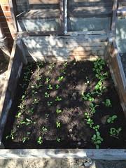 soil start farm 10.6.16