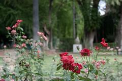 Jardines del Alczar (Bazinga!) Tags: siviglia sevilla seville realalcazar alcazar jardines jardinesdelalcazar roses flowers flor flores fiori fiore