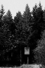 Deep in the Woods (Psychic Readings) Tags: halloween dark lights forest witch hunt wood bw black white trees darkness
