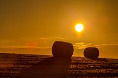 First Light (ianbonnell) Tags: goldenhour harvest rural morning farmland billinge sthelens wigan merseyside lancashire england uk