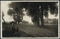 Archiv H325 Grukarte aus Bremerhaven vom 1. Mrz 1907 (Hans-Michael Tappen) Tags: archivhansmichaeltappen gruskarte kirchlinteln verdenaller landwirtschaft scenery landschaft allee wanderer 1900er vintage 1900s 1907