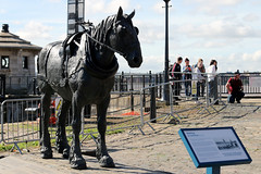 Horse (Cumberland Patriot) Tags: liverpool waterfront water front river mersey merseyside