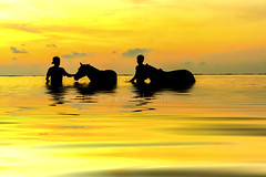 Two shepherds playing with horse during sunset (sydeen) Tags: horse beach horseback water rider silhouette sea sunset ocean animal nature people outdoor vacation lifestyle sky sun reflection two yellow cloud wave shadow half seashore sunrise shepherd