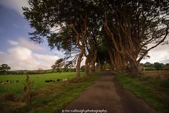 DSC_1118 (PATRICK.69) Tags: hedges armoy bushside co antrim
