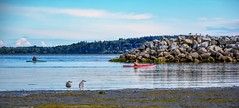 People watchers (Images by Christie  Happy Clicks for) Tags: beach paddlers seagulls summer shoreline breakwater ocean whiterock bc canada britishcolumbia sand sea birds people peoplewatching peoplewatchers
