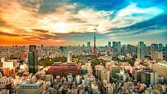 (Natsuko) Tags:  tokyo tokyotower