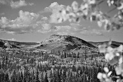 Fall in Black & White (MIKOFOX  Show Your EXIF!) Tags: canada yukon fall aspen mountains fujifilmxt1 spruce monochrome landscape xt1 bw blackandwhite showyourexif clouds mikofox september xf18135mmf3556rlmoiswr